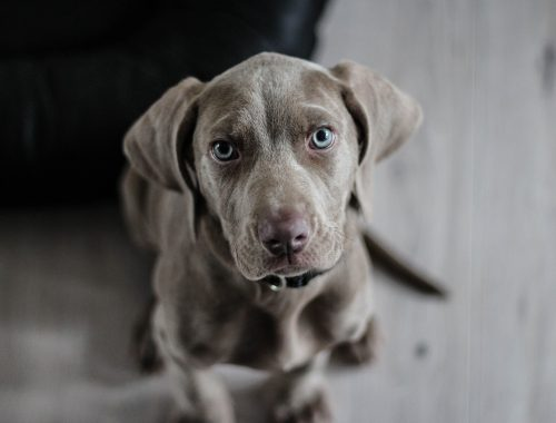 #csakegygondolat – Ha úgy tudnék imádkozni, ahogyan a kutya néz a húsra című cikk borítóképe