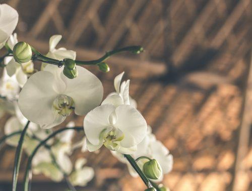 #csakegygondolat – Isten orchideája című cikk borítóképe